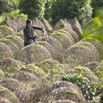 花木中国:温江寿安编织介绍、设计、施工