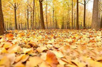 选择适合帐篷营地的景观植物 与大自然来次亲密接触