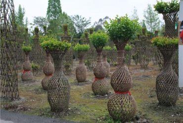 植物编艺-紫薇花瓶
