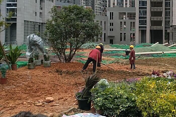 怎样做一个优秀的植物景观工程样板(2.现场施工)