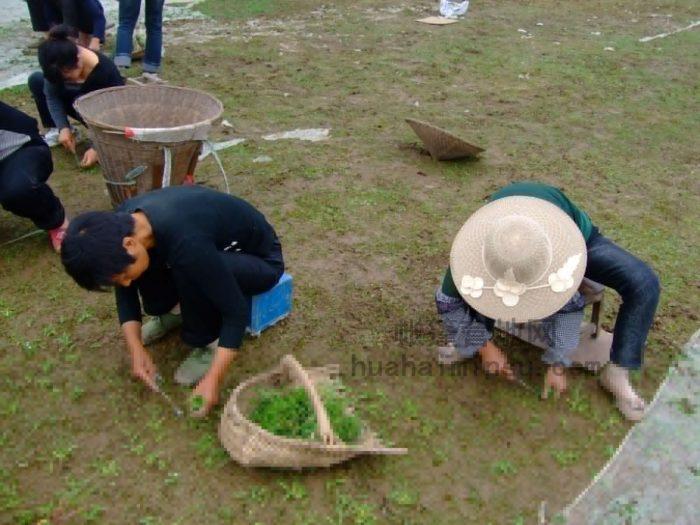 怎样建设一个省心又低成本的帐篷营地草坪