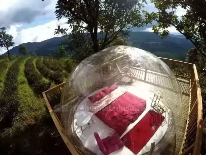 南糯山茶园泡泡屋星空房,躺在床上数星星